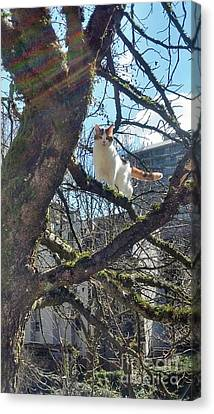 Canvas Print featuring the photograph Tree Climber by Bill Thomson