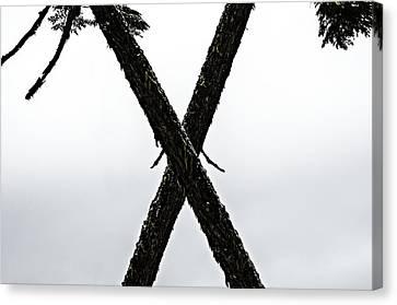 Tree Crossing X Canvas Print