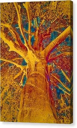 Bold Colors Canvas Print - Tree Crown by Frank Tschakert