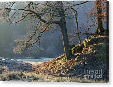 Tree Details, Elterwater Canvas Print by Tony Higginson