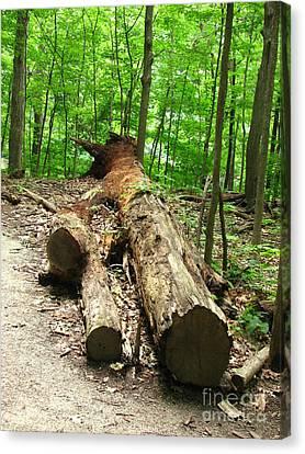 Tree Down Canvas Print