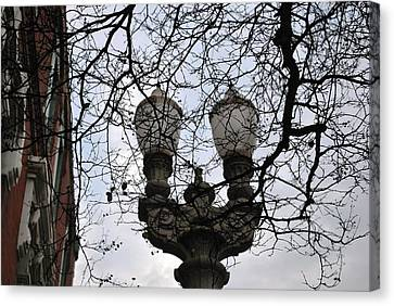 Canvas Print featuring the photograph Tree Framed Lampost by Matt Harang