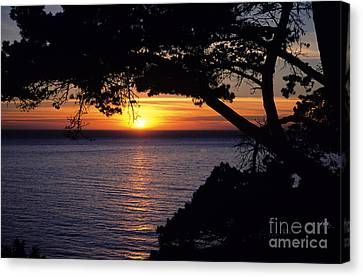 Overhang Canvas Print - Tree Framing Seascape Sunset by Ali ONeal - Printscapes