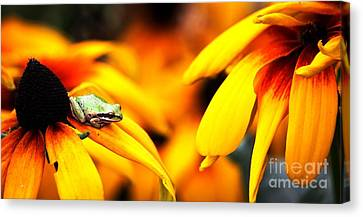 Canvas Print - Tree Frog And Flowers by Nick Gustafson