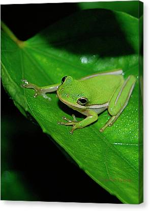Tree Frog On Hibiscus Leaf Canvas Print by DigiArt Diaries by Vicky B Fuller