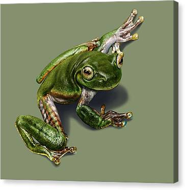 Tree Frog  Canvas Print by Owen Bell