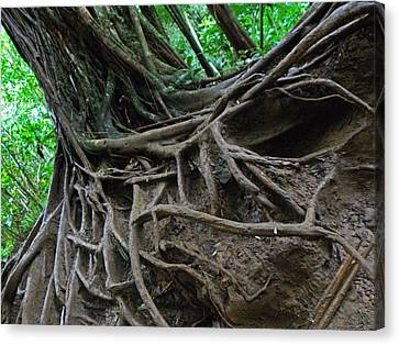 Tree From Manoa Falls Canvas Print by Elizabeth Hoskinson