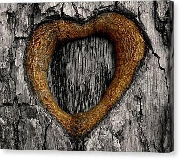 Tree Graffiti Heart Canvas Print by Chris Berry