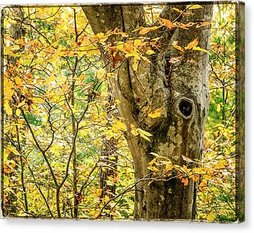 Tree Hollow Canvas Print by Frank Winters