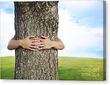 Tree Hugger 2 Canvas Print by Brandon Tabiolo - Printscapes