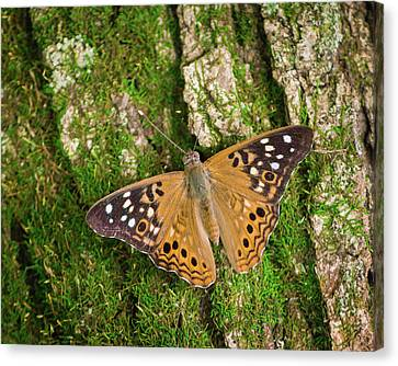 Canvas Print featuring the photograph Tree Hugger by Bill Pevlor