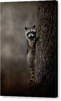 Tree Hugger Raccoon Art Canvas Print by Jai Johnson