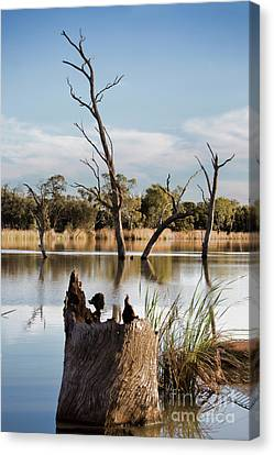 Canvas Print featuring the photograph Tree Image by Douglas Barnard