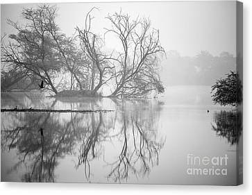 Tree In A Lake Canvas Print by Pravine Chester