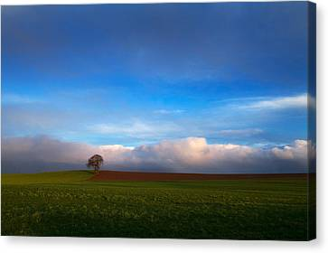 Tree In Arable Farmland Near Carlow Canvas Print by Panoramic Images
