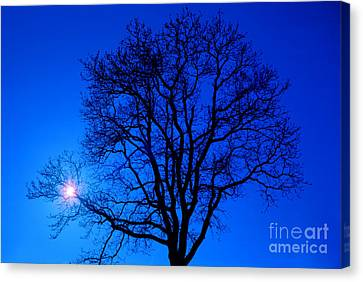 Tree In Blue Sky Canvas Print by Silvia Ganora