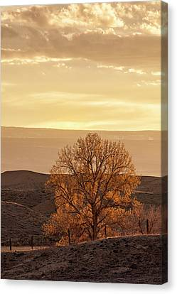 Tree In Desert At Sunset Canvas Print