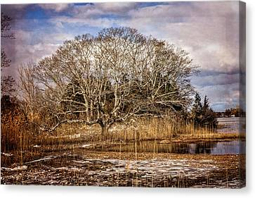 Tree In Marsh Canvas Print by Frank Winters