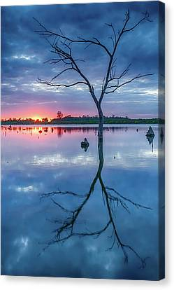 Tree In Silhouette Canvas Print by Jae Mishra