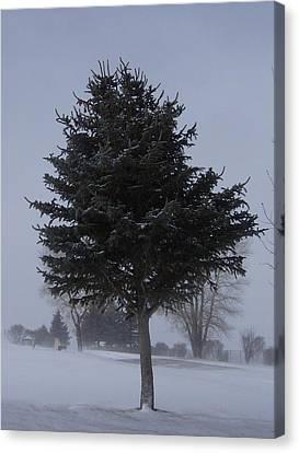 Tree In Snowstrom Canvas Print by Susan Pedrini