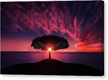 Tree In Sunset Canvas Print by Bess Hamiti