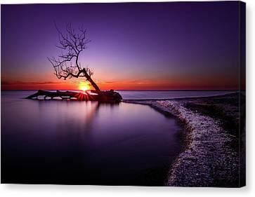 Tree In The Lake - Henderson, Ny. Lake Ontario Southwick Beach Sunset Sunrise Canvas Print by Bradley P Smith