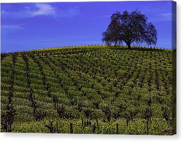 Tree In The Vineyards Canvas Print