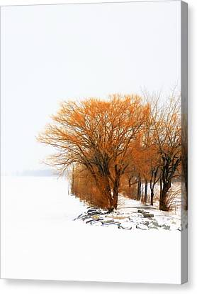 Tree In The Winter Canvas Print