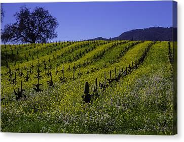 Tree  In Vineyards Canvas Print