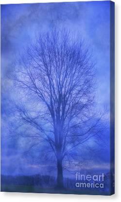 Tree In Winter Fog Canvas Print