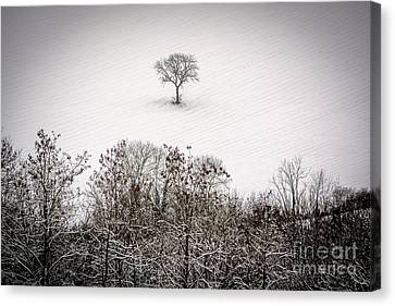 Tree Isolated In Winter. Auvergne. France Canvas Print by Bernard Jaubert