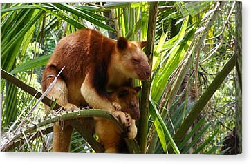 Tree Kangaroo 1 Canvas Print by Gary Crockett