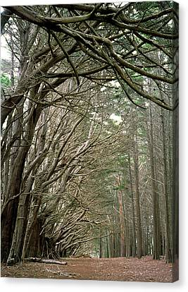 Canvas Print featuring the photograph Tree Lane by Art Shimamura