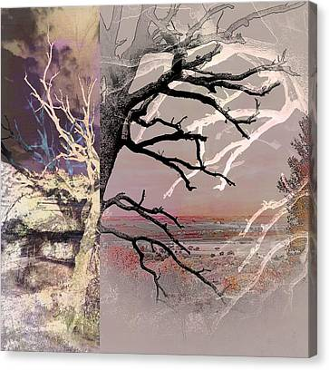 Tree Layers 8 Canvas Print by Dorothy Berry-Lound