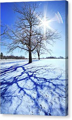 Canvas Print featuring the photograph Tree Light by Phil Koch