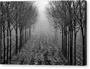 Tree Line Canvas Print by David  Hubbs