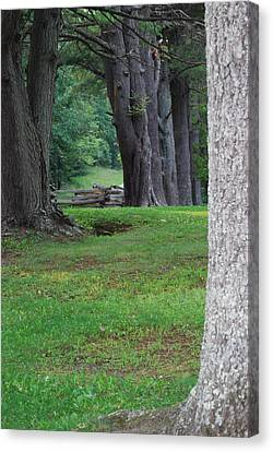 Tree Line Canvas Print by Eric Liller