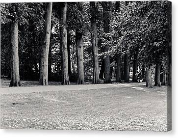 Tree Lined Path Canvas Print by Edward Myers