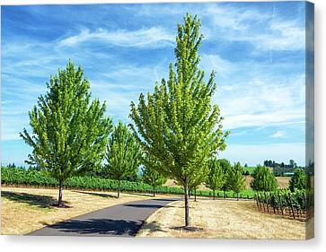 Tree Lined Road And Vineyard Canvas Print