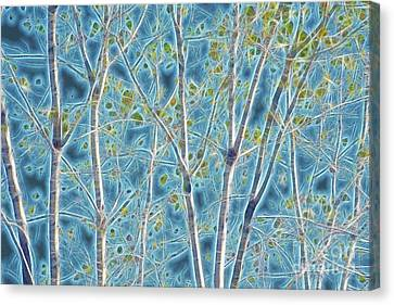 Canvas Print - Tree Lines - A40 by Variance Collections