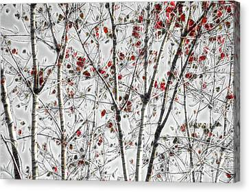 Canvas Print - Tree Lines - A44 by Variance Collections