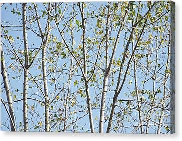 Canvas Print - Tree Lines  by Variance Collections