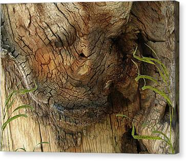 Canvas Print featuring the photograph Tree Memories # 22 by Ed Hall