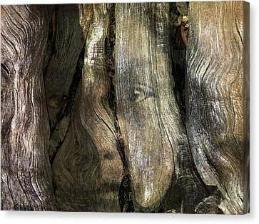 Canvas Print featuring the photograph Tree Memories # 24 by Ed Hall