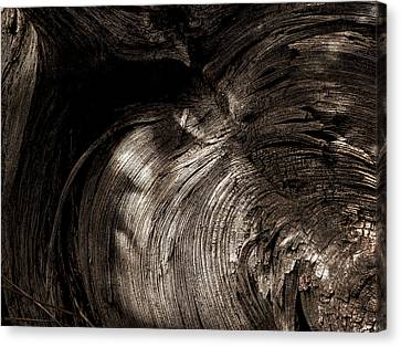 Canvas Print featuring the photograph Tree Memories # 31 by Ed Hall