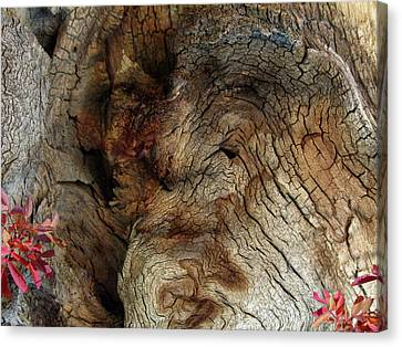 Canvas Print featuring the photograph Tree Memories # 34 by Ed Hall