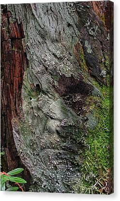 Canvas Print featuring the photograph Tree Memories # 38 by Ed Hall