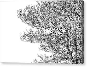 Tree No. 7-2 Canvas Print