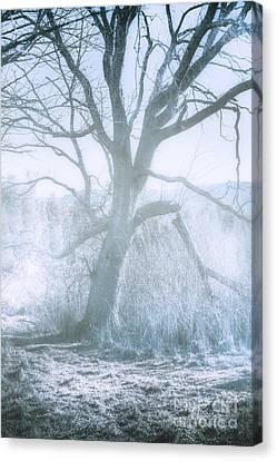 Tree Of Frost Bite Canvas Print