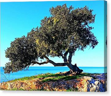 Tree Of Life - 5 Canvas Print by Tap On Photo